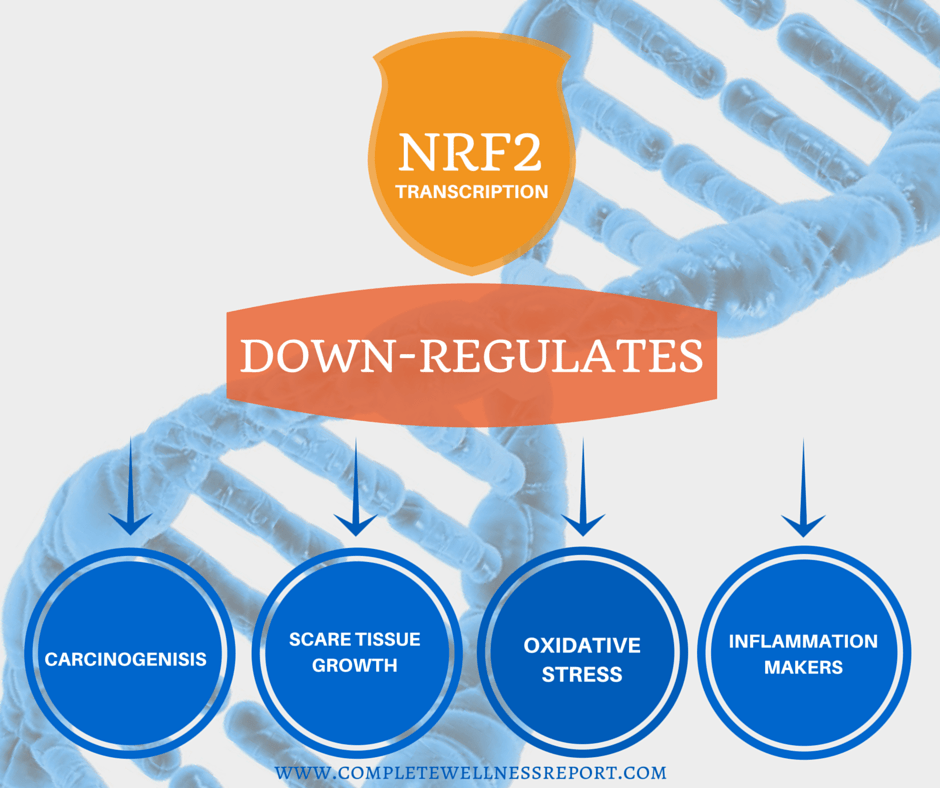 NRF2 activation slows aging